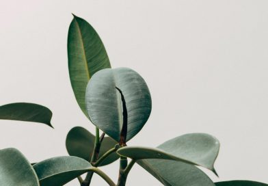 Planten tip – Creëer rust