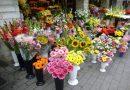 Bloemist Amsterdam in hart en nieren